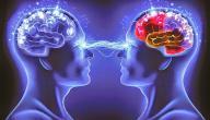 خصائص التفكير الفلسفي
