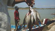 الصيد في ليبيا