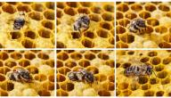 عدد عيون النحله