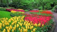 مظاهر فصل الربيع