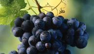 فوائد عصير العنب الأسود