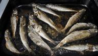 سمك بالفرن منال العالم