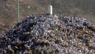 سبب تسمية جبل عرفات