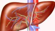 طريقة تنظيف الكبد من السموم