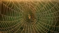 ما اسم بيت العنكبوت