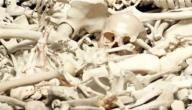 عدد العظام الموجودة في جسم الإنسان البالغ