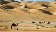 ما هي أكبر صحراء في العالم