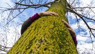 اطول شجرة بالعالم