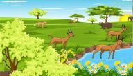 تنوع الأوساط البيئية