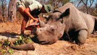 صيد الحيوانات البرية