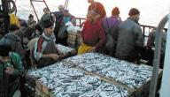 الصيد البحري في الجزائر