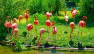 أجمل حديقة حيوان في العالم