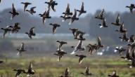 طرق صيد الطيور