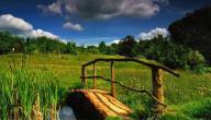 الطبيعة في روسيا