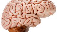 تأثير الحشيش على المخ
