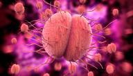 تشخيص مرض السيلان