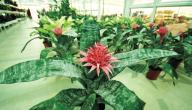 أسماء نباتات الزينة المنزلية