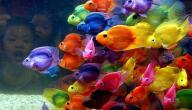 أسباب موت سمك الزينة