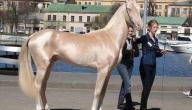 أفضل حصان في العالم