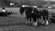 أدوات الزراعة القديمة