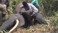 حماية الحيوانات من الانقراض
