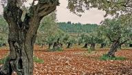 الطبيعة في فلسطين