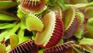 موضوع تعبير عن نباتات تصيد الحشرات