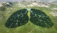 العلاقة بين الإنسان والبيئة