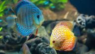 كيف تتنفس الأسماك تحت الماء
