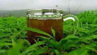 فوائد الشاي الأخضر الصيني للتخسيس