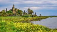 المحافظة على البيئة في الإسلام