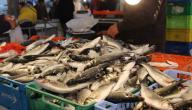 الصيد البحري في تونس