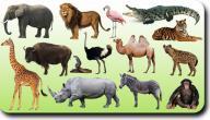 سلاسل غذائية للحيوانات