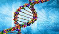 كيفية عمل تحليل DNA