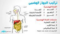 شرح الجهاز الهضمي