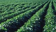 الوسائل الزراعية