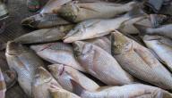 بحث عن الثروة السمكية