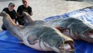 فوائد سمك الجري العراقي