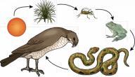 سلسلة غذائية حيوانية