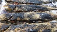 طريقة السمك المشوي على الفحم