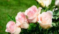 طريقة حفظ الورد الطبيعي