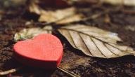 علامات الحب عند الشباب