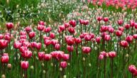 خصائص فصل الربيع