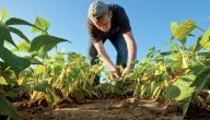 مفهوم الزراعة