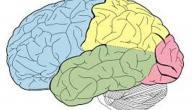 10 نصائح للحفاظ علي سلامه المخ