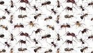 طرق للتخلص من النمل