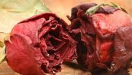 فوائد الورد الجوري المجفف