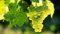فوائد العنب الأخضر للرجيم