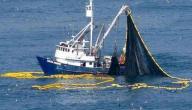 عالم الأسماك والصيد
