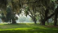 كيف تتنفس الأشجار